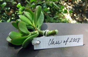 Graduation Party Favor Ideas 5